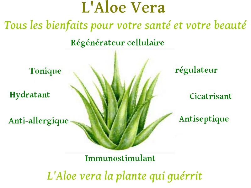 Aloe vera de forever living products - Bienfait de l aloe vera ...